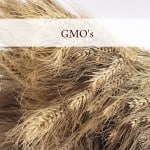 GMOs - PLR Articles