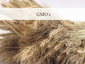 GMO PLR Articles